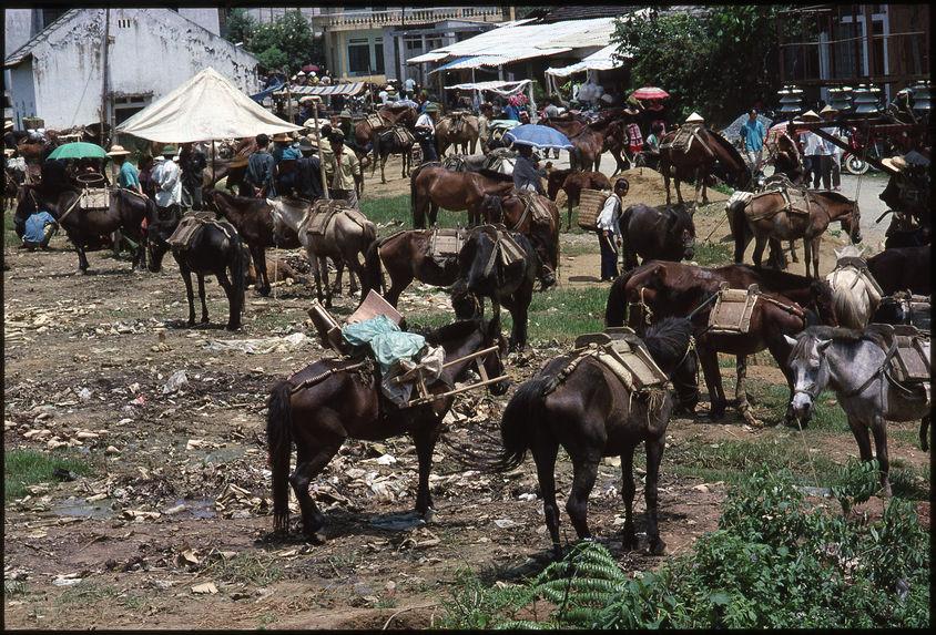 Parking des chevaux de bât au marché de Bac Ha
