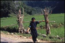 Femme portant le bois pour le foyer à la palanche