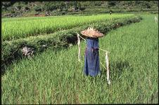 Epouvantail portant le costume des femmes Nung