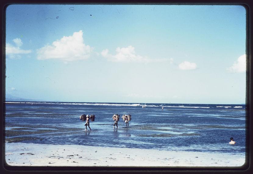 Des hommes sortent de l'eau avec des paniers de coraux