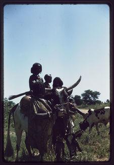 Les Peuls Bororo