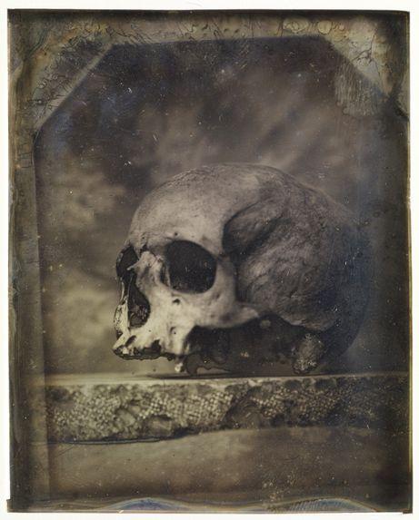 Crâne canarien