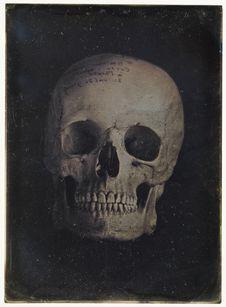 Crâne de Corse