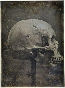 Crâne de Chinois,