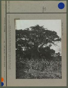 Première culture en forêt