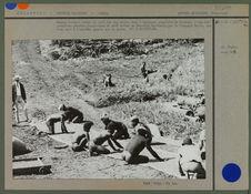 Hommes faisant sécher le café