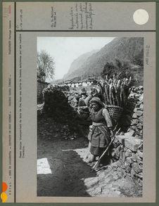 Femme sherpa transportant du bois de feu