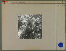 Forêt équatoriale dans les Tumuc Humac