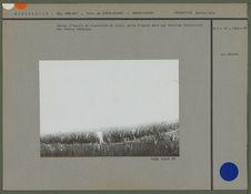 Centre d'essais de plantation de sisal