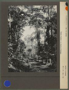 Chemin d'accès à la réserve d'Ototomo
