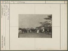 Chevaux de Sénégal