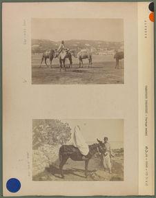 Groupe de chameaux