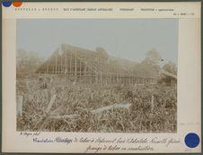 Plantation de tabac à Stefansort