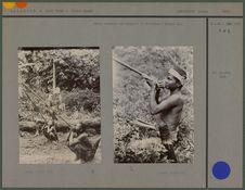 Sakai chassant les singes