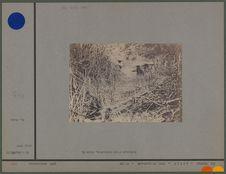 Estampage d'une inscription, ruine 9.