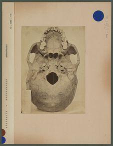 Crâne australien de Rockhampton