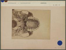 Partie de crâne australien de Rockhampton