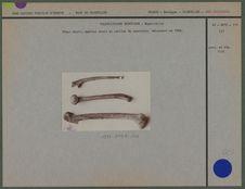 Fémur droit, humérus droit et cubitus du squelette découvert en 1888