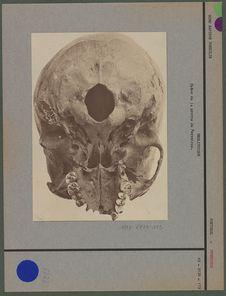 Crâne de la grotte de Ferreiros