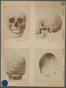 Crâne de Moqui