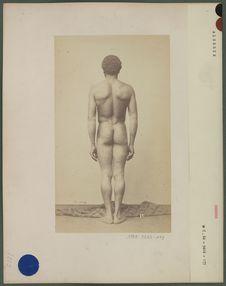 Type d'homme berbère (dos)