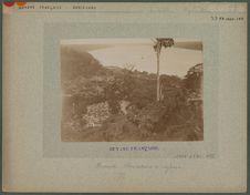 Pariacabo.- Plantations de caféiers
