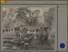 Eléphants et bonzes
