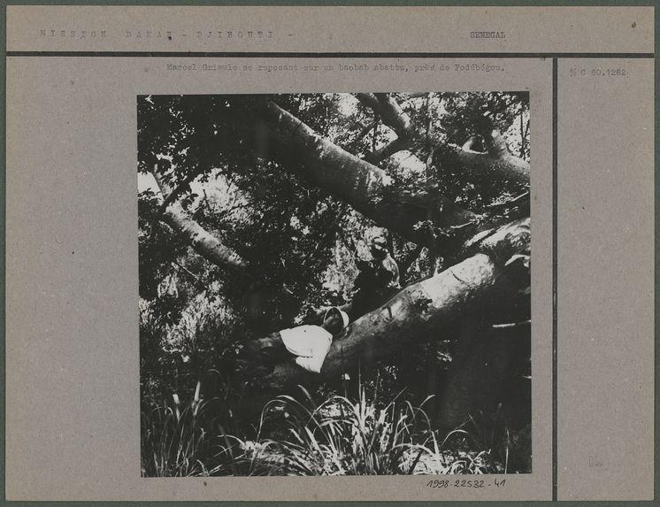 Griaule se reposant sur un baobab abattu