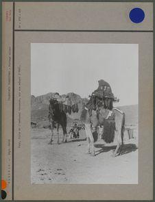 Fati, fille de l'amenokal Akhamouk, sur son méhari