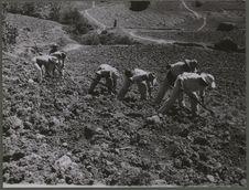 Hommes en train de semer