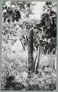 Sculpture de grade en stipe de fougère arborescente