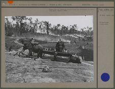 Eléphants et convicts travaillant le bois
