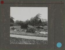 Sans titre [étang d'un jardin de Buitenzorg]