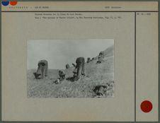 Statues dressées sur le flanc du Rano Raraku