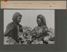 Femmes dans un champ de coton