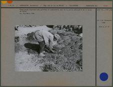 Femme Kurde façonnant des galettes de combustible