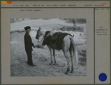 Cheval turkémène harnaché