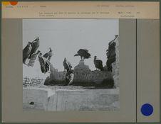 Les vautours qui font le service du nettoyage