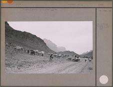 Troupeau au pâturage dans le célèbre wadi Ram