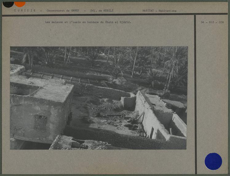Les maisons et l'oasis en bordure du Chott el Djérid