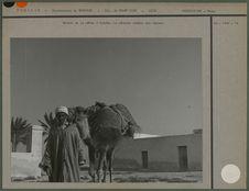 Retour de la pêche à Djerba
