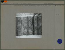 Plafond fait de palmier