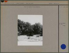 Tente en bordure d'une palmeraie