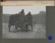 Une hyène tuée dans le camp de tirailleurs