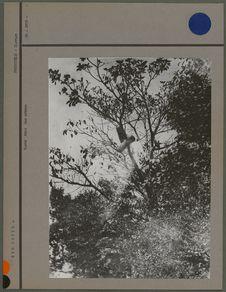 Ruche dans un arbre