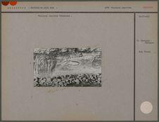 Peintures rupestres Tehuelches
