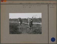 Femmes partant chargées pour la plantation