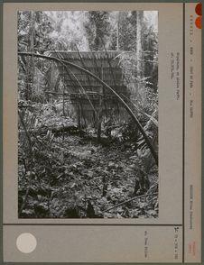 Sépulture en plein forêt