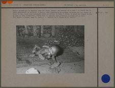 Enfant attaché par la cheville avec une liane