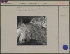 Traces et empreintes de Lion des cavernes (Felis Spelacus)